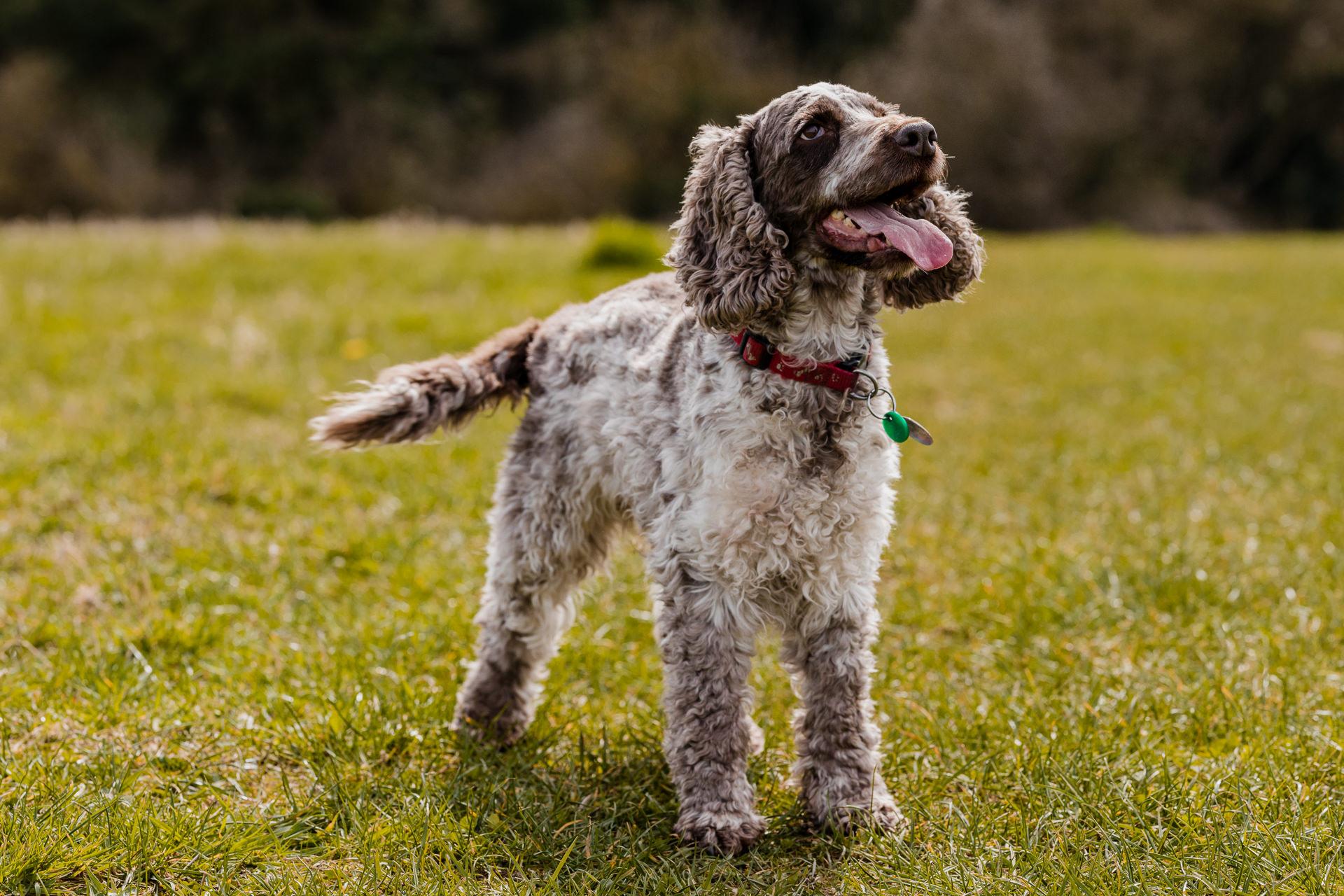 Dog and Pet Photographer Oxford Oxfordshire Banbury Witney Steeple Aston Abingdon Bicester Thame
