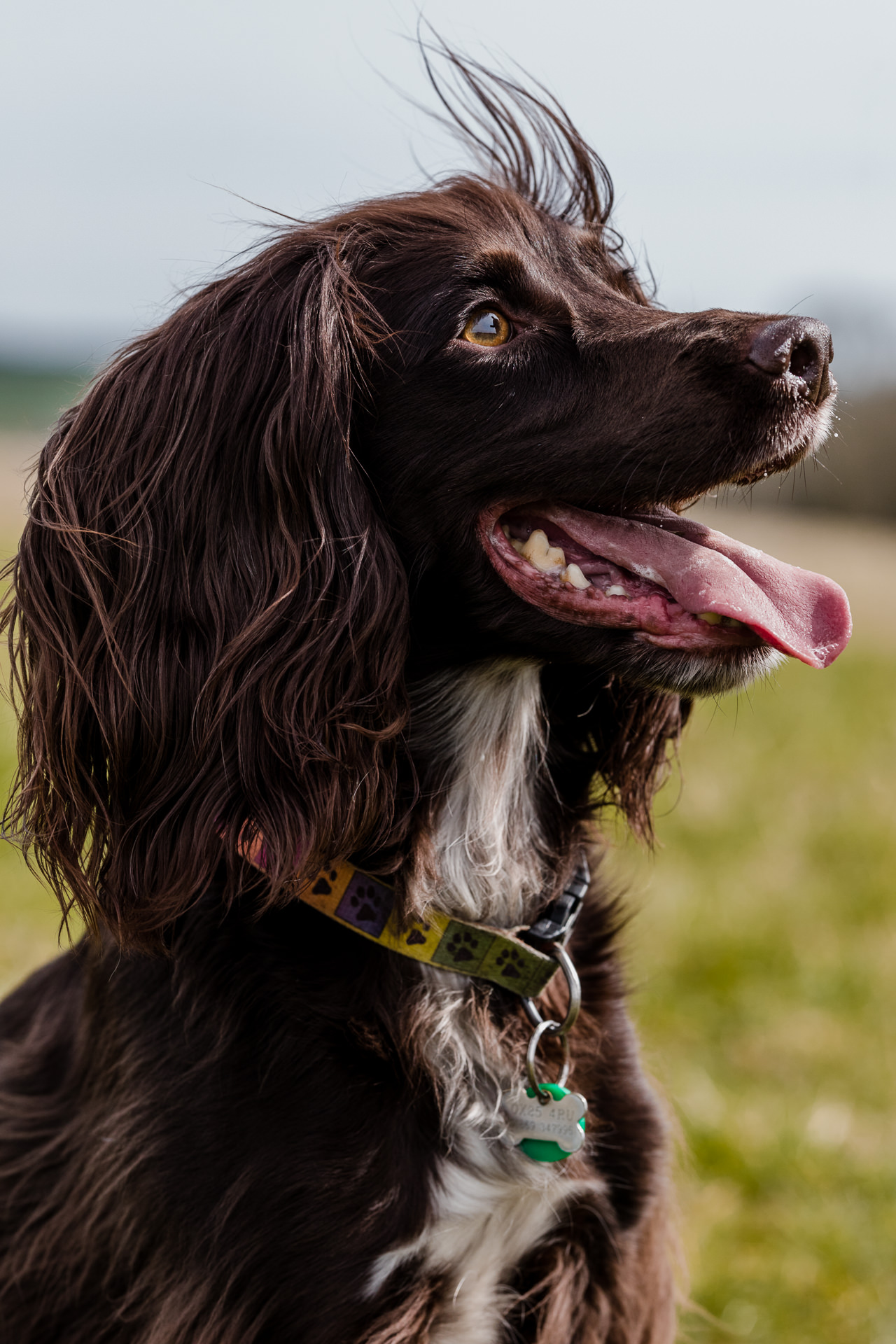 Dog and Pet Photographer Oxford Oxfordshire Banbury Witney Steeple Aston Abingdon Bicester Thame