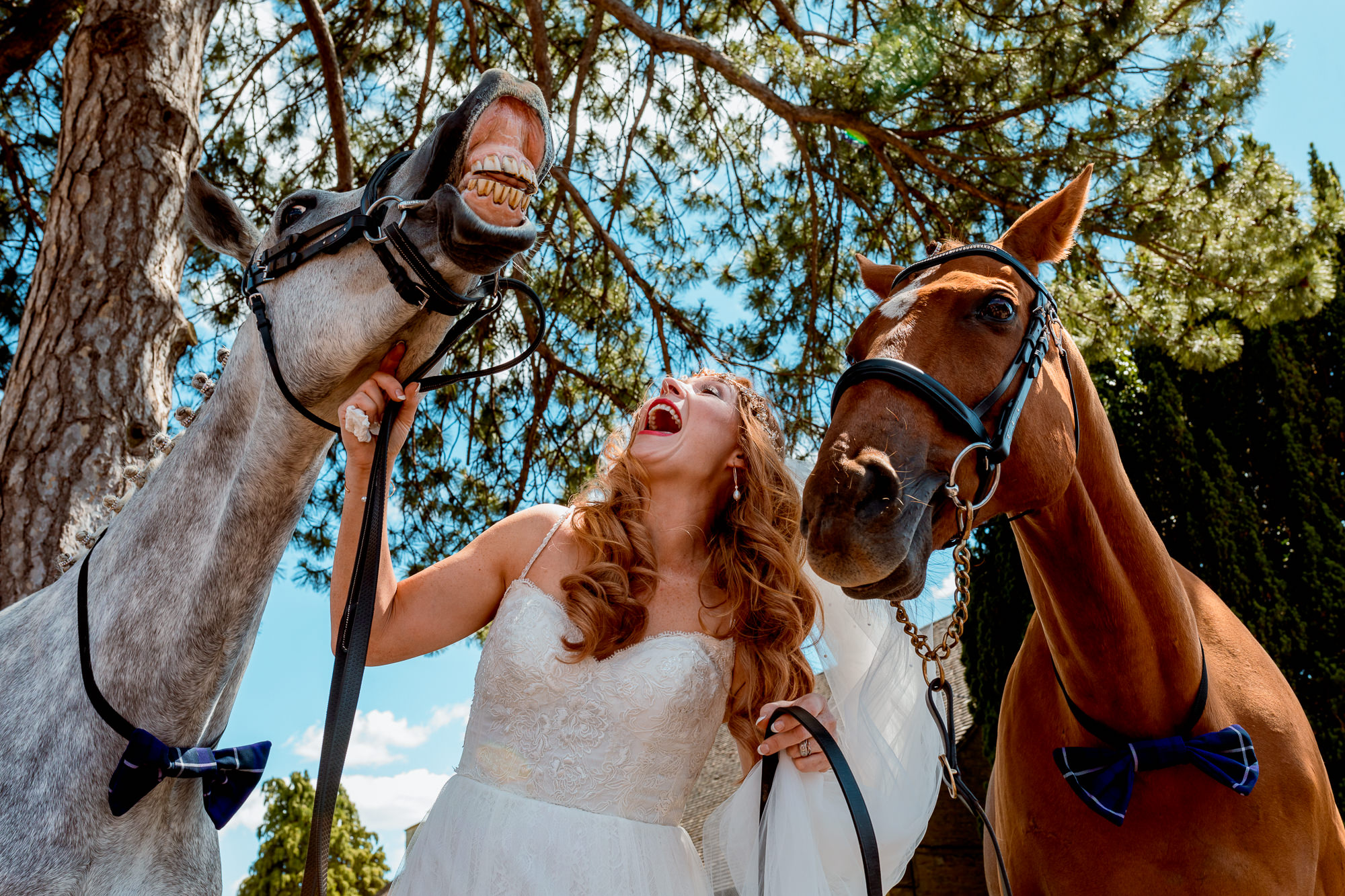 Chaple and Marquee Wedding Brackley Oxfordshire. Bride with her horses in bow ties